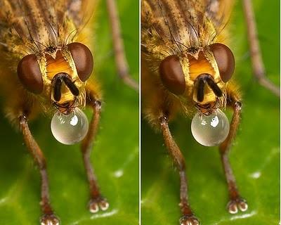 3d sem oculos inseto