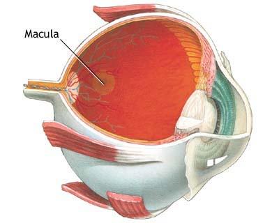 Uso diário da aspirina pode elevar o risco de doença ocular
