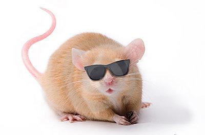 Cientistas desenvolvem substância que 'devolve' visão a ratos cegos